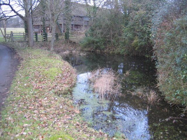 Pond, Chadshunt