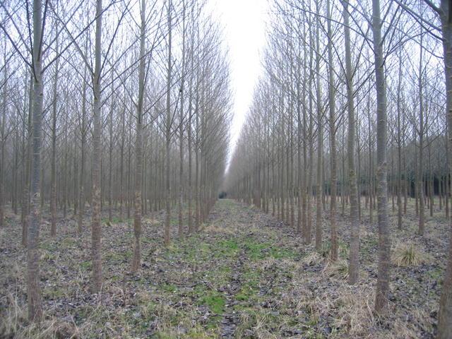 Plantation near Bishop's Gorse