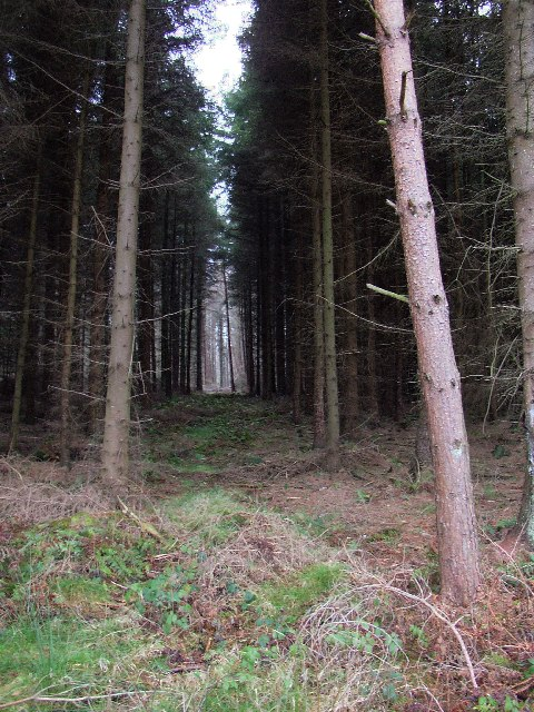 Forest Ride, Little Timble, North Yorkshire