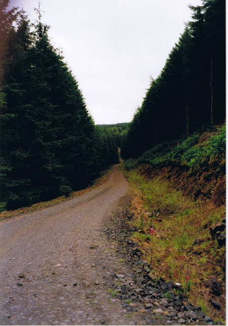 Track through Ardmore Forest