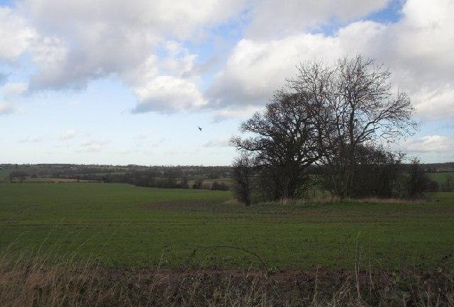 A view towards Bentley
