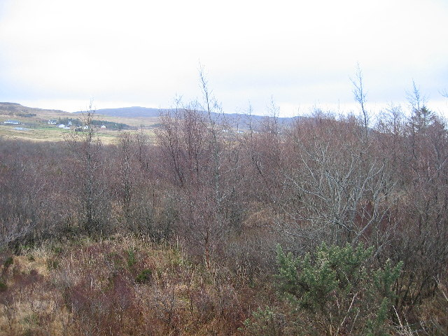 Woodland near Portree