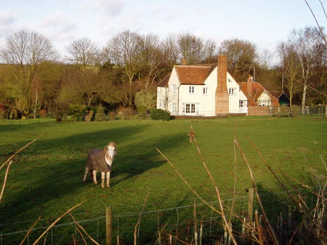 Horse at Sandons Farm, Ashdon