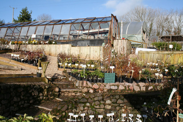 Tiverton: Withleigh Nursery