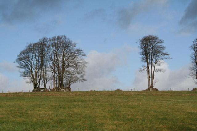 Cruwys Morchard: near Hill Farm