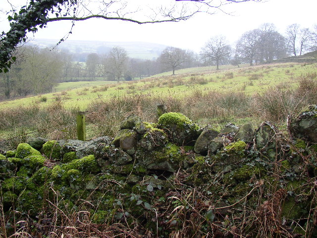 Mossy wall and wet field, Norwood, North Yorkshire