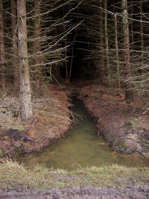 Drainage ditch in the Lindley Moor conifer plantation, Lindley, North Yorkshire
