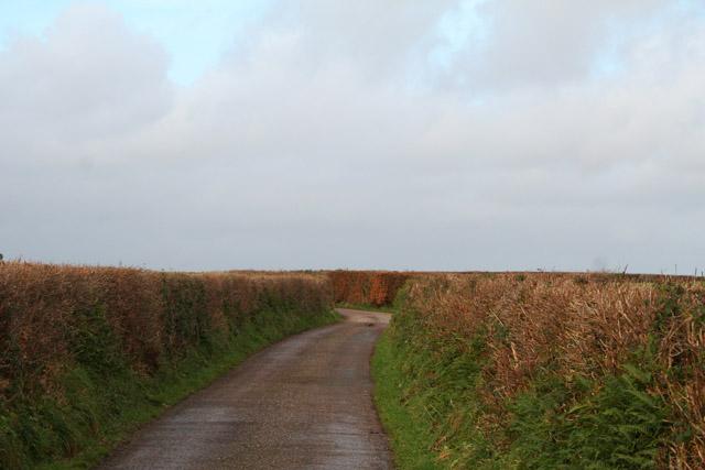 Washford Pyne: lane from Black Dog