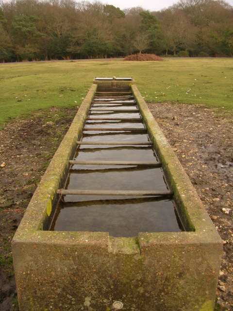 Water trough on Janesmoor Plain, New Forest
