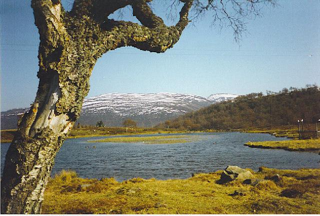 Pond at top of Chapel Brae, Braemar