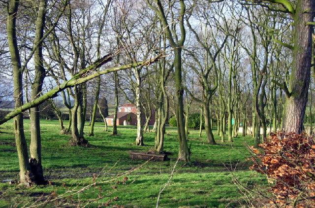 Trees, Furze Hill
