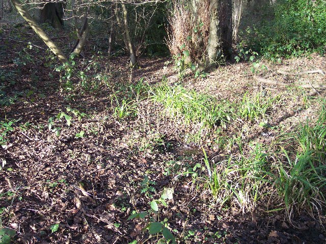 Spring in Mayall's Coppice