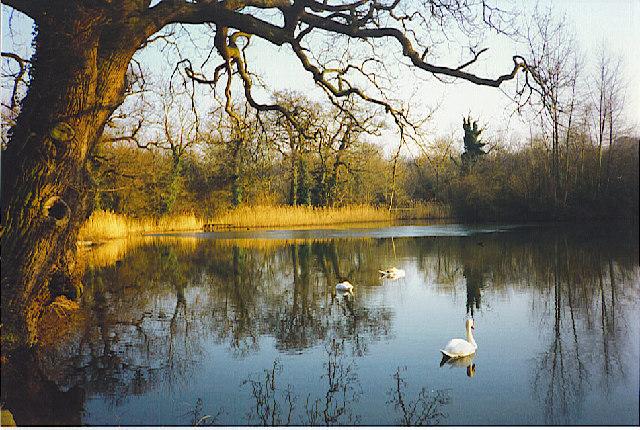 Pond in Clandon Park
