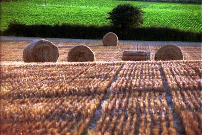 Round bales in field at Mells Crossing, Suffolk