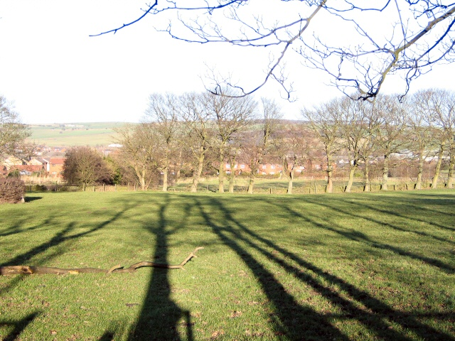 Shadows on The Green