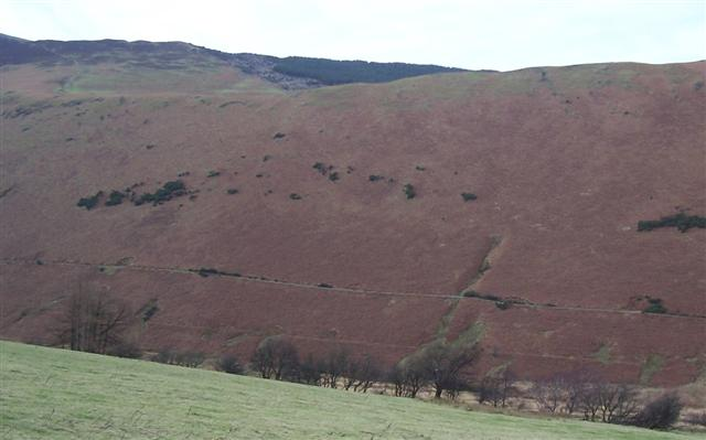 Looking across Coledale to Hospital Plantation