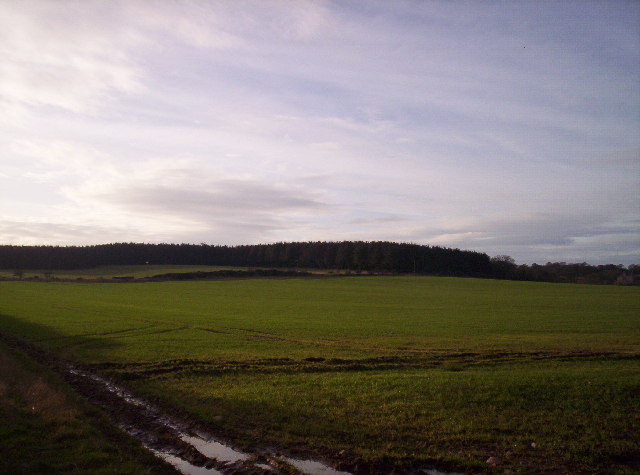 Fields and Woodland