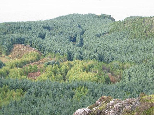 Oans Forestry