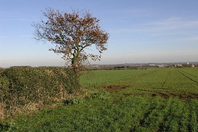 The Shire Oak