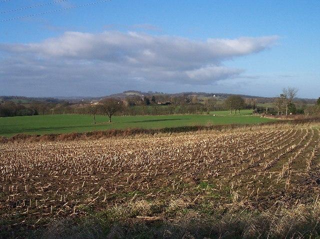 Maize Stubble, Halfridge Farm