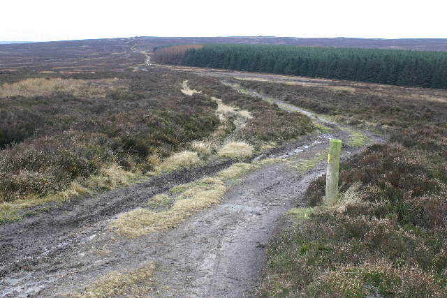 Moorland track near York Cross