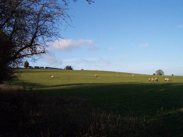 Sheep Grazing on Hillside, Linton