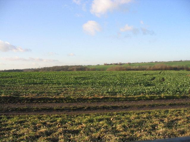 Farmland near Epping
