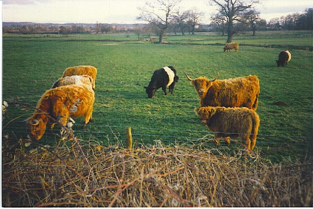 Burpham Court Farm, Rare Breeds a Speciality!