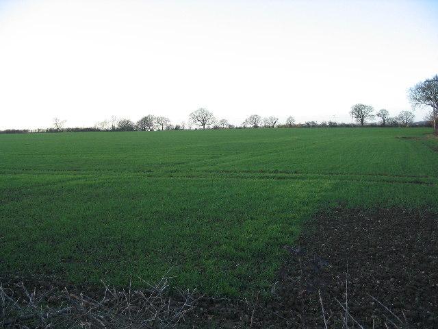 Field near Jack's Hatch