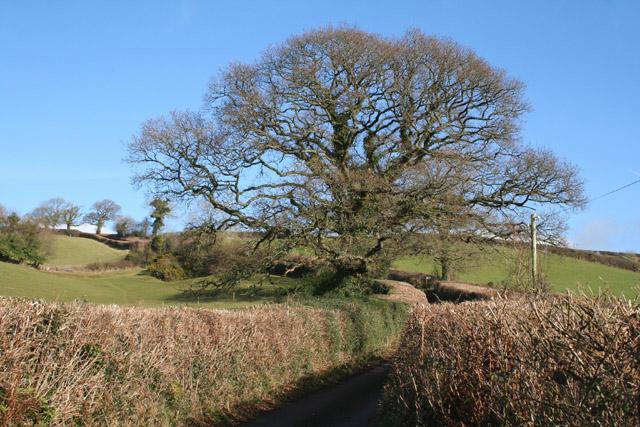 Tiverton: lane near Coombewillis