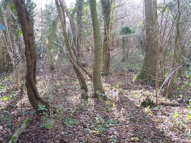 Woodland Floor in January, Mayall's Coppice