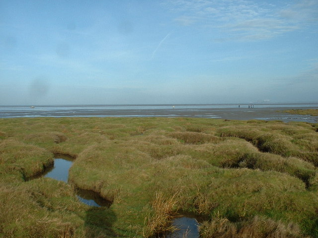 Pilling Marshes near Fluke Hall