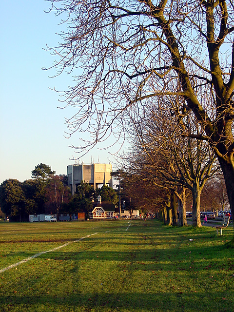 Trees along Stoke Road and the Water Tower