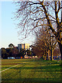 ST5675 : Trees along Stoke Road and the Water Tower by Linda Bailey