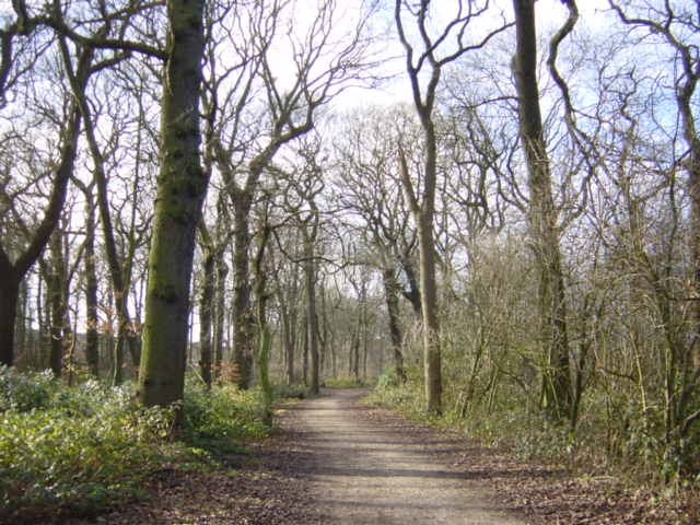 Woodland walk, Croxteth Country Park