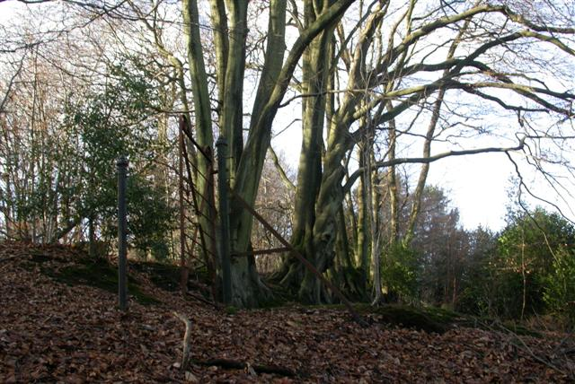 Hurthill Copse