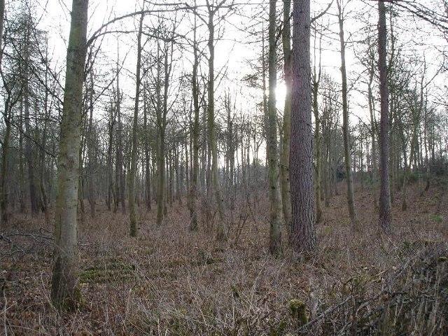 Woodland at Llanelidan
