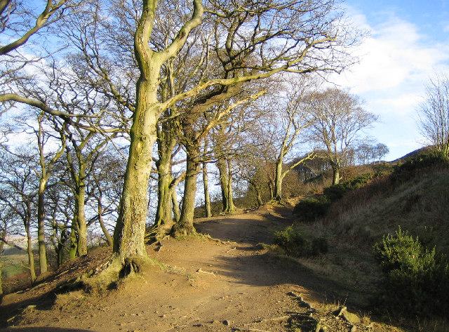 Bridleway to Skipton Moor