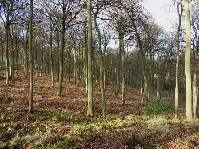 Shotridge Wood, Wormsley Estate