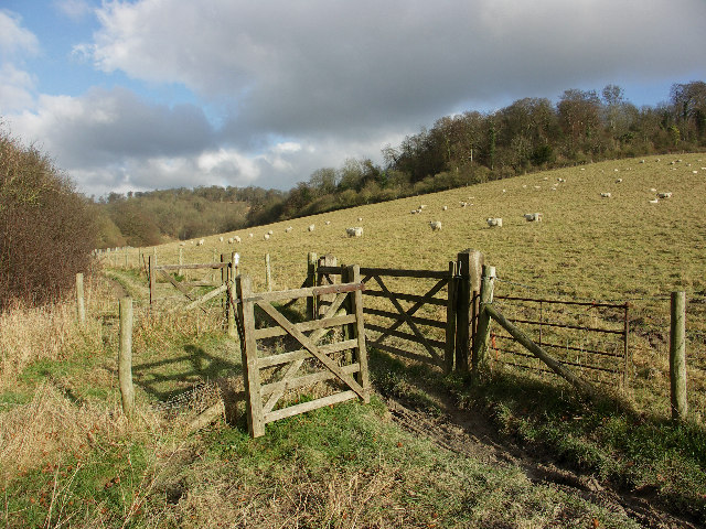 Sheep pasture, Wormsley Estate