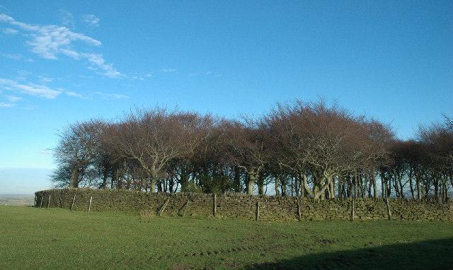 Ring Wood, near Hartcliff Hill