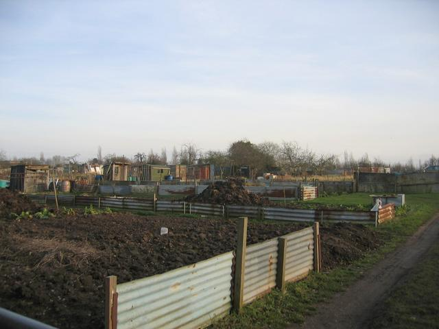 Black Lane Allotments