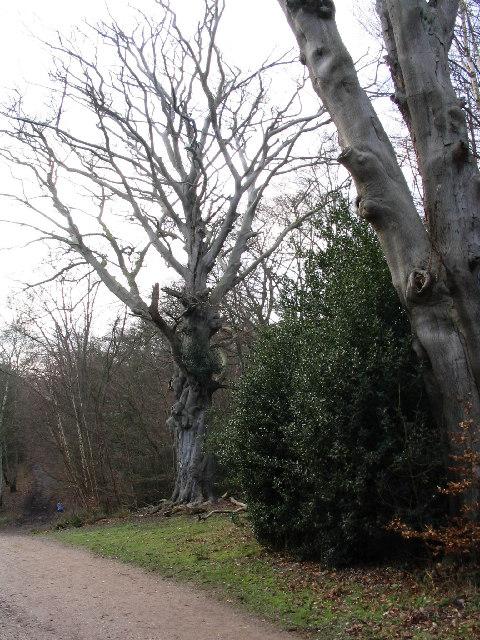 Centenary Walk near Epping Thicks