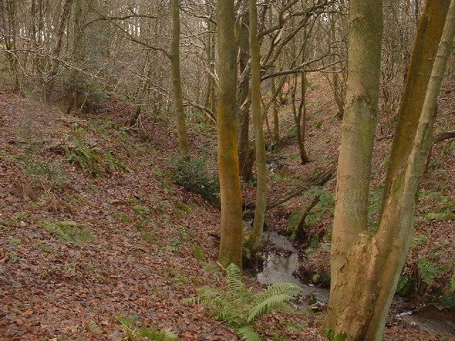 Curwen Wood