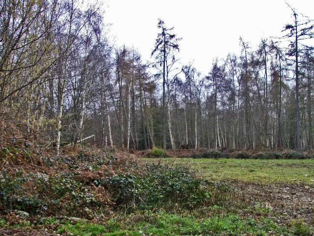 Thunderfield Grove Nature Reserve, Cheshunt, Hertfordshire