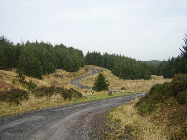 Track Through Whitelee Forest