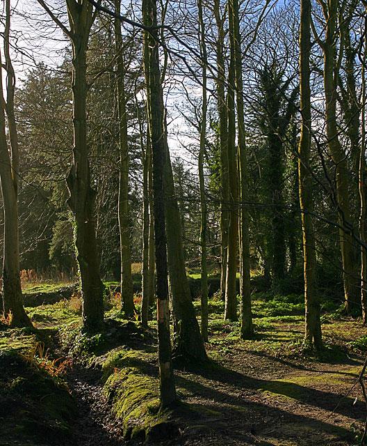 Woodland by the Silverburn
