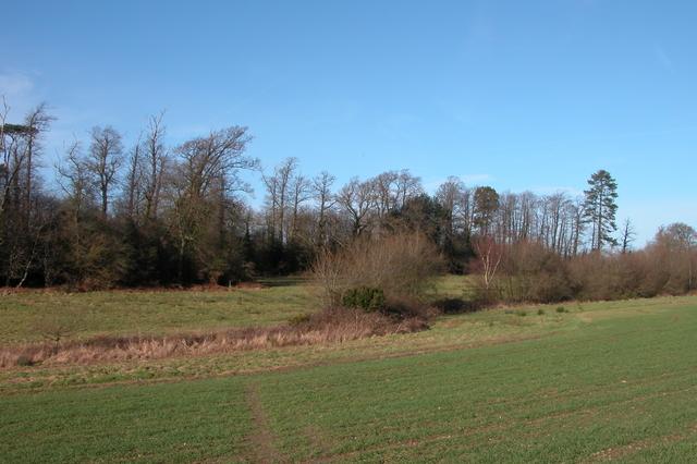 Looking towards woodland at Walton Heath, Northwest of Southwick.