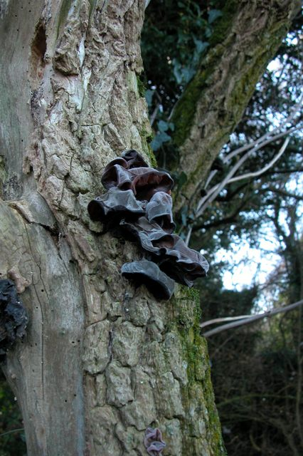 Fungus on tree, near Fort Widley.