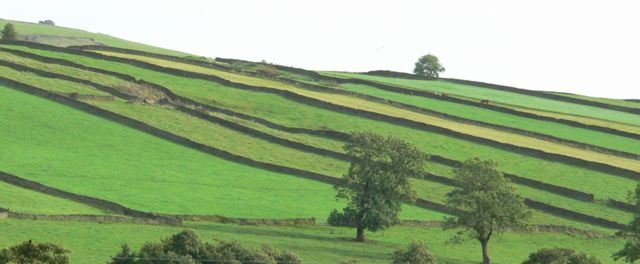 Field Strips, near Longnor, Staffordshire.